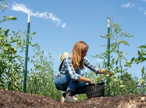 A garden in Pasadenas food desert may help battle diabetes