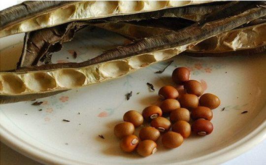 Chọn hạt đậu rồng có chất lượng tốt khi sử dụng