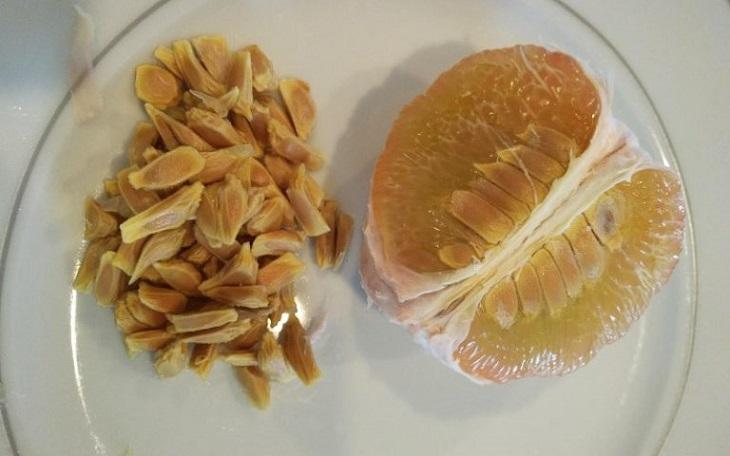 Chất nhầy hạt bưởi có công dụng chữa bệnh hiệu quả