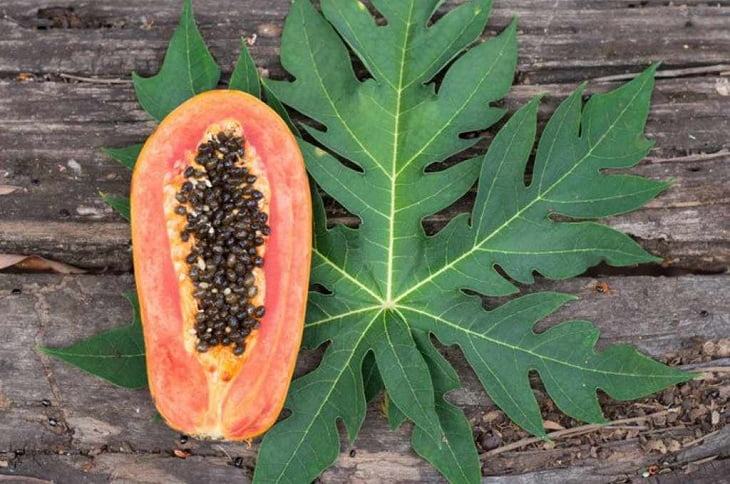 Chữa đau dạ dày bằng lá đu đủ có hiệu quả không?