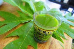 Nước ép lá đu đủ hỗ trợ điều trị đau dạ dày
