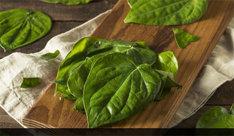 Chữa đau dạ dày bằng lá trầu không là phương pháp an toàn