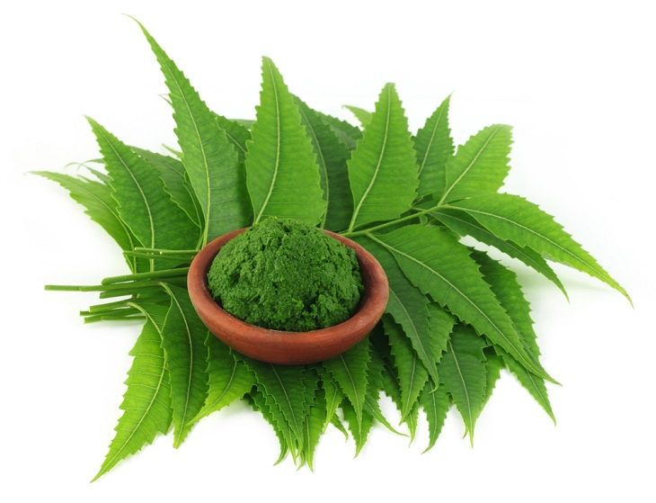 Bài thuốc điều trị eczema bằng lá neem hiệu quả nhất