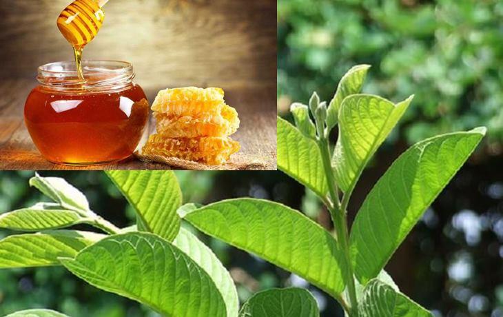 Chữa đau dạ dày bằng lá ổi tươi kết hợp với mật ong