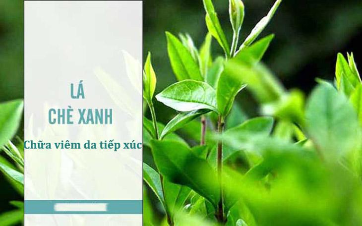 Lá trà xanh giúp chữa viêm da tiếp xúc ở tay, mặt hiệu quả