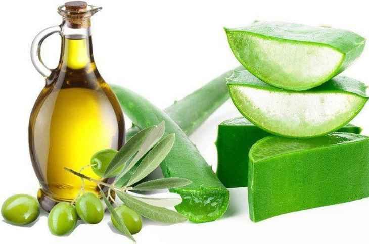 Nha đam kết hợp với dầu oliu là cách chữa ngứa da vào mùa đông hiệu quả