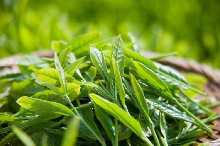 Sử dụng nước chè xanh vệ sinh vùng kín giúp giảm viêm ngứa