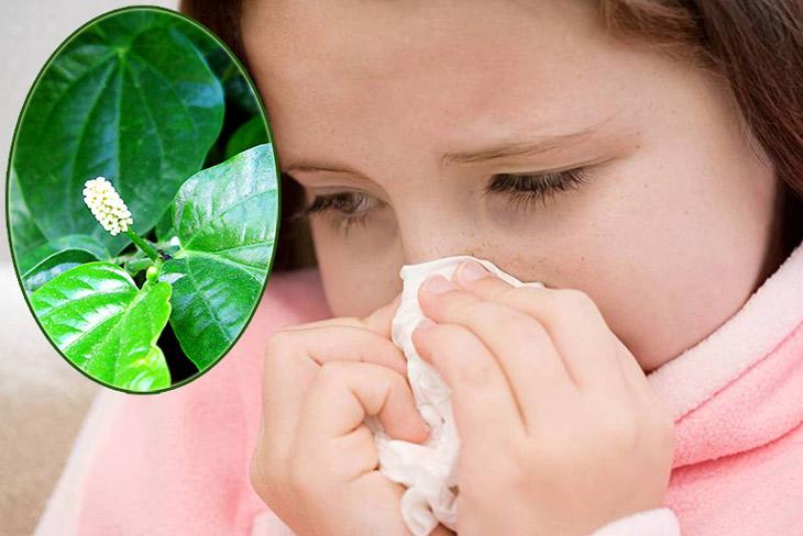 Cách chữa viêm xoang tại nhà bằng lá lốt giúp giảm triệu chứng bệnh