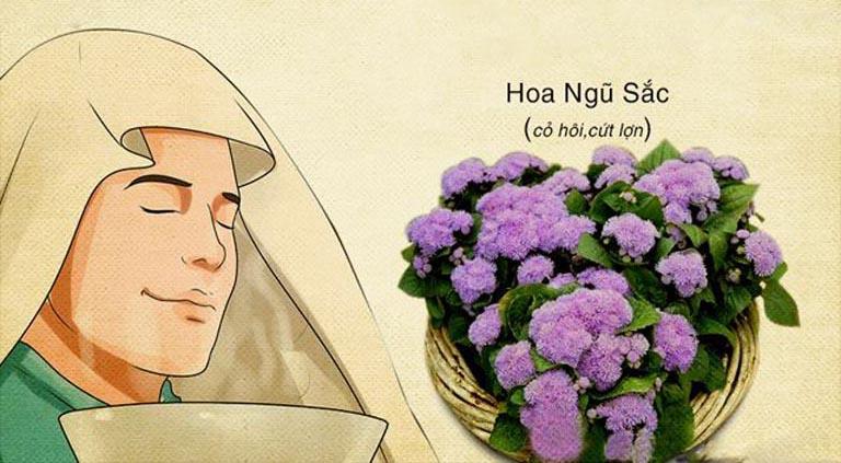 Cách trị viêm xoang tại nhà bằng hoa ngũ sắc cũng đem lại hiệu quả tốt