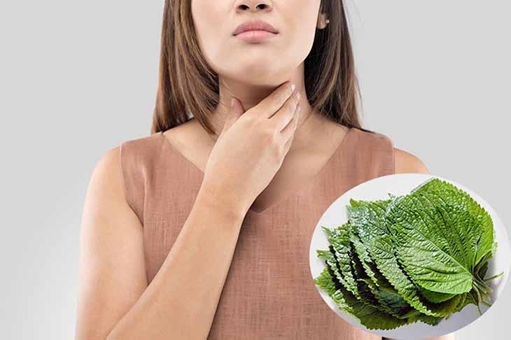 Những lưu ý khi chữa viêm amidan bằng thảo dược