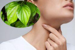 Tham khảo 5 phương pháp chữa viêm amidan bằng lá trầu không hiệu quả