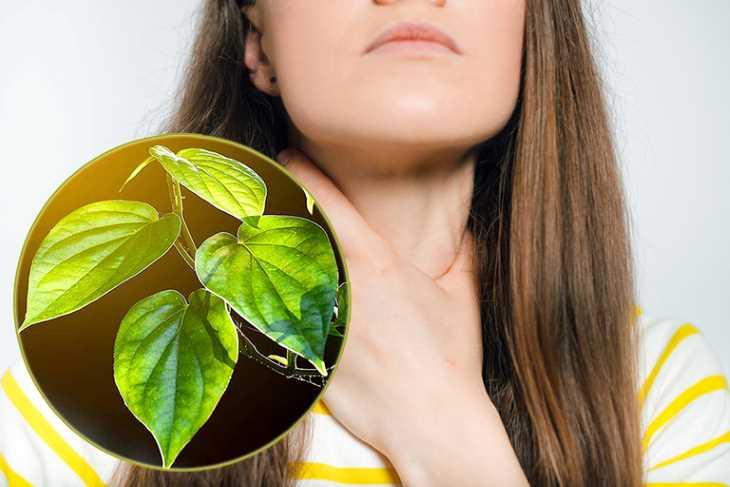 Những lưu ý người bệnh cần chú ý khi chữa viêm amidan bằng lá trầu không