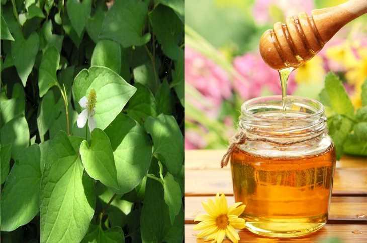 Rau diếp cá kết hợp với mật ong giúp làm dịu họng, giảm kích ứng do viêm họng
