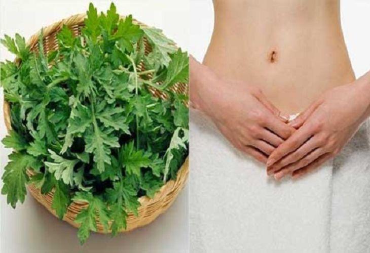 Ngải cứu điều trị viêm cổ tử cung mãn tính hiệu quả