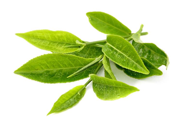 Lá trà xanh - Lá tắm chữa viêm da cơ địa có nhiều công hiệu