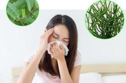 Những cây thuốc chữa bệnh viêm xoang mang lại hiệu quả cao
