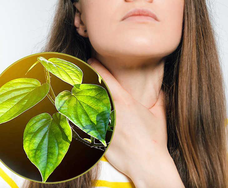 Những cây thuốc chữa bệnh viêm xoang từ lá trầu không giúp phòng và điều trị bệnh hiệu quả
