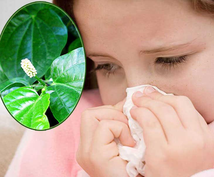 Lá lốt chứa chất kháng khuẩn, kháng viêm giúp điều trị viêm xoang hiệu quả