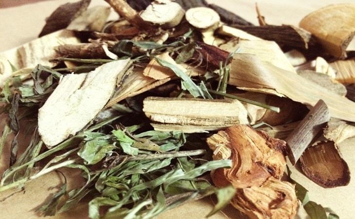 Bài thuốc đông y chữa dạ dày với cây lá khôi nhung