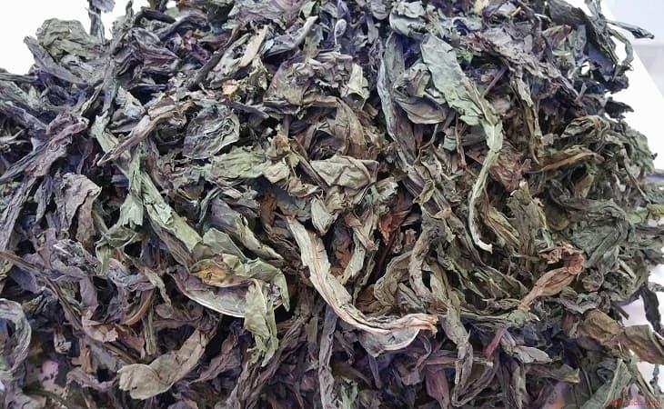 Bài thuốc chữa bệnh đau dạ dày với lá cây khôi khô