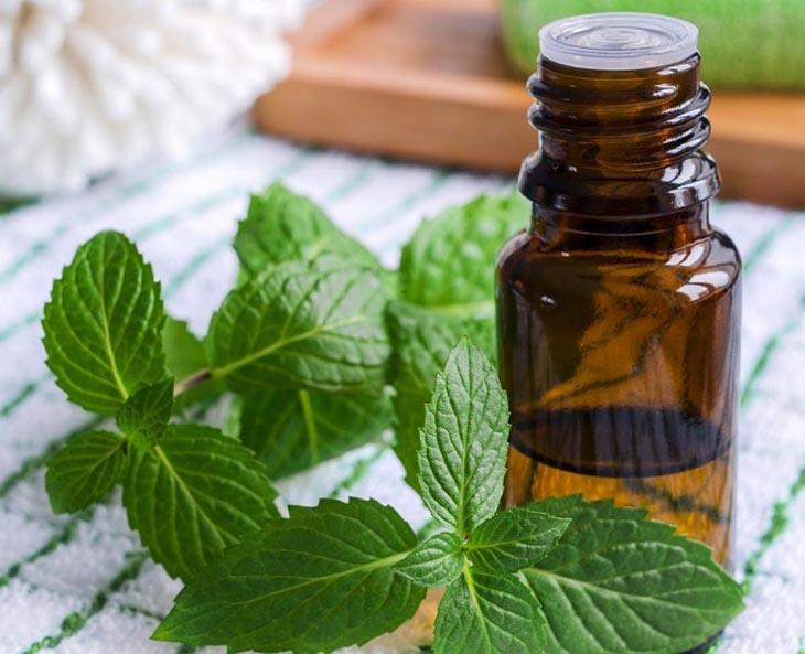 Tinh dầu bạc hà là một trong những nguyên liệu quen thuộc để trị viêm xoang hàm
