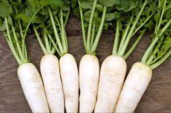 Ăn củ cải trắng bị huyết trắng [Giải đáp từ chuyên gia]