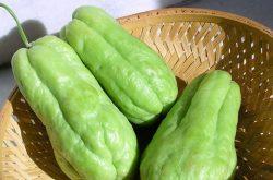 an su su bi huyet trang co phai that khong