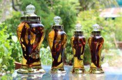 Bài thuốc ngâm rượu chữa yếu sinh lý