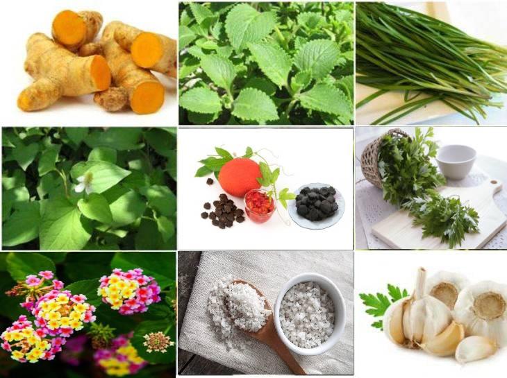 Bổ sung rau củ quả, khoáng chất cần thiết cho cơ thể