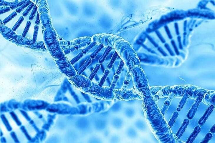 Những bất thường ở gen và hệ thống miễn dịch có liên quan đến bệnh vảy nến vùng kín