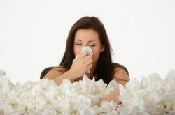 Cách chữa viêm mũi dị ứng hiệu quả