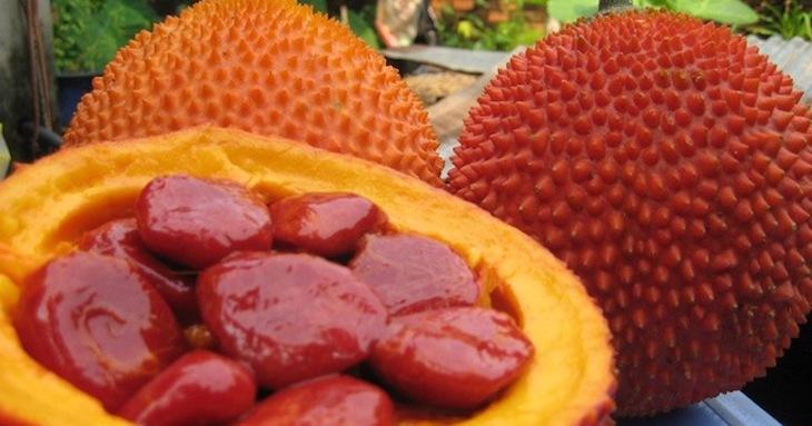 Bài thuốc từ hạt gấc chữa viêm xoang
