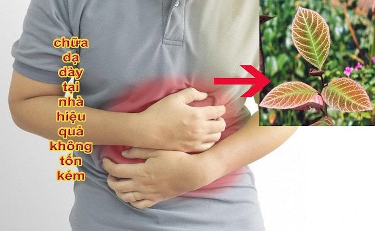 Cây khôi chữa bệnh dạ dày tại nhà vừa hiệu quả vừa an toàn
