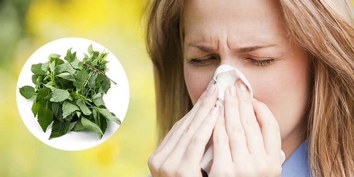 Cây kinh giới không chỉ để tăng hương vị cho món ăn mà còn chữa được viêm mũi dị ứng, viêm xoang, phong hàn