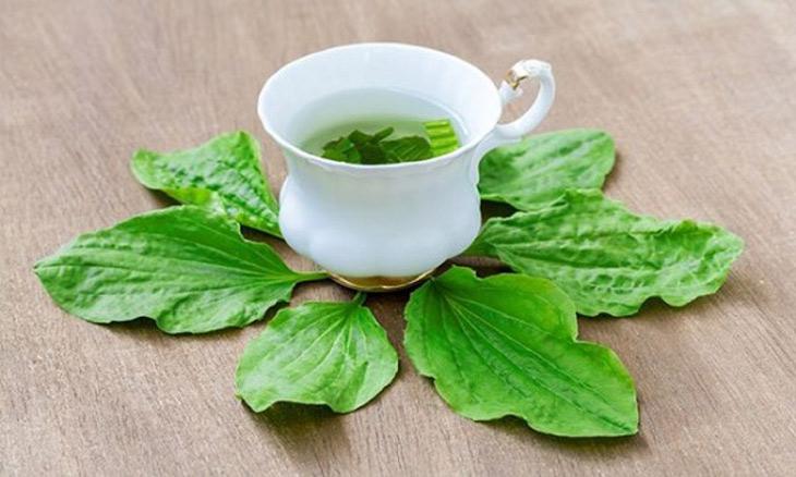 Pha trà từ cây mã đề là cách thực hiện đơn giản, dễ thực hiện