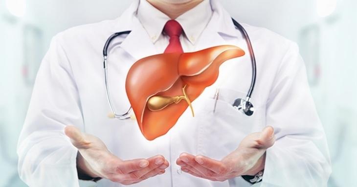 Cây xạ đen còn có công dụng tốt đối với các bệnh lý về gan