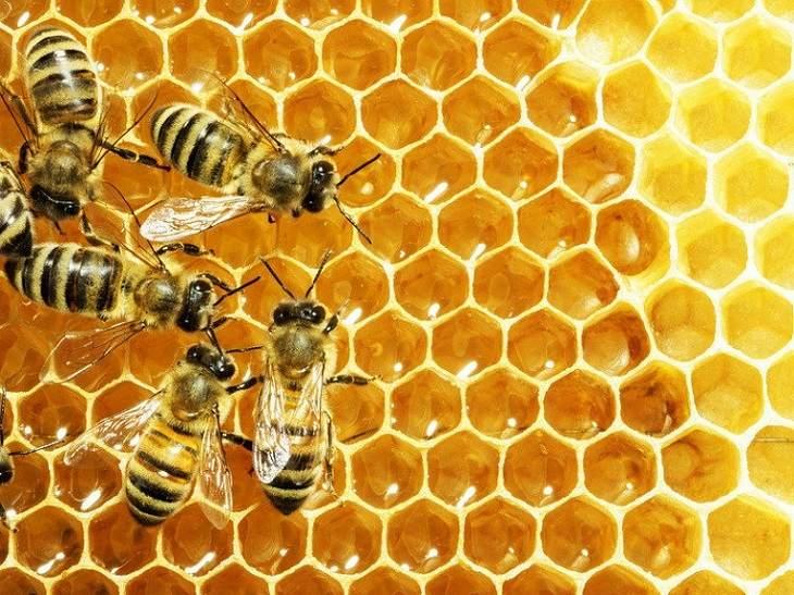 Cách trị ngứa da toàn thân chỉ với mật ong