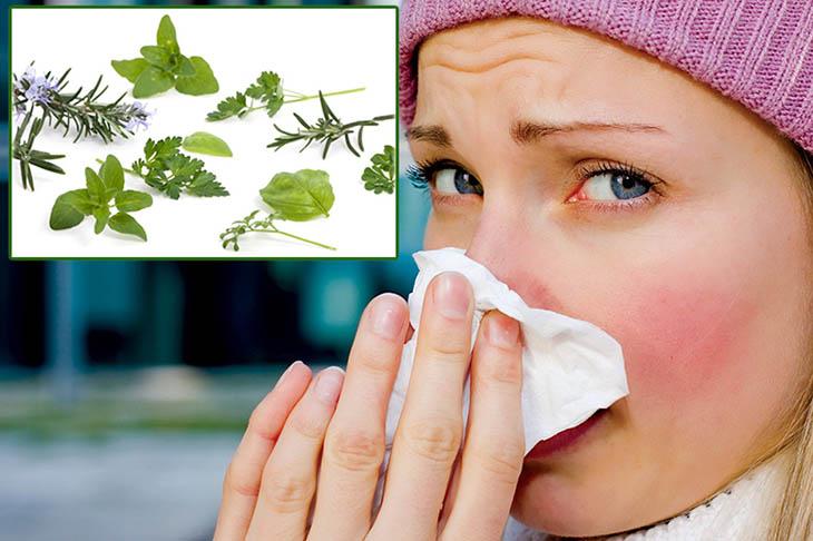 Người bệnh không nên quá phụ thuộc vào cách chữa viêm mũi dị ứng bằng lá cây