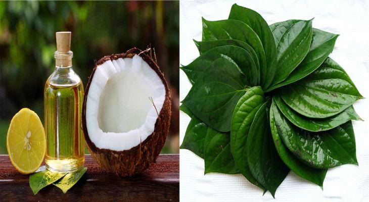 Dầu dừa và lá trầu không chữa nấm candida hiệu quả