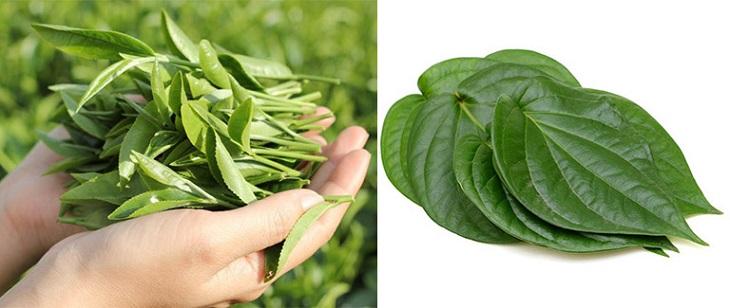 Chữa huyết trắng ra nhiều bằng lá trầu không và lá trà xanh