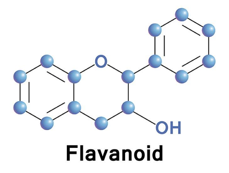 Flavonoid cũng là một trong những hoạt chất quan trọng của khổ qua rừng