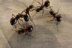 Kiến bu vào huyết trắng cảnh báo nhiều bệnh lý nguy hiểm