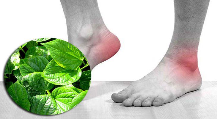 Bạn có thể khắc phục tình trạng ngứa gót chân từ những nguyên liệu thiên nhiên vô cùng đơn giản