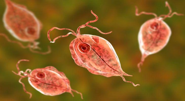 Trichomonas là nguyên nhân gây ra huyết trắng đục sệt ở chị em