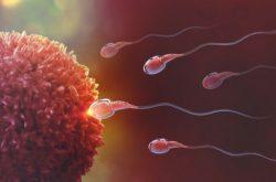 Tắc 2 vòi trứng có thai tự nhiên được không?