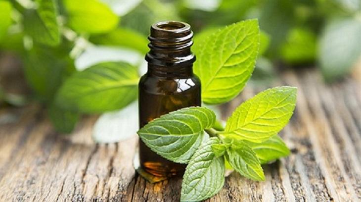 Tinh dầu bạch đàn kết hợp cùng tinh dầu bạc hà cho hiệu quả chữa viêm xoang tốt hơn