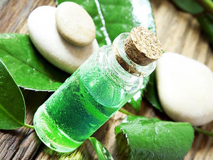 Tinh dầu cây trà hỗ trợ điều trị mụn thâm hiệu quả
