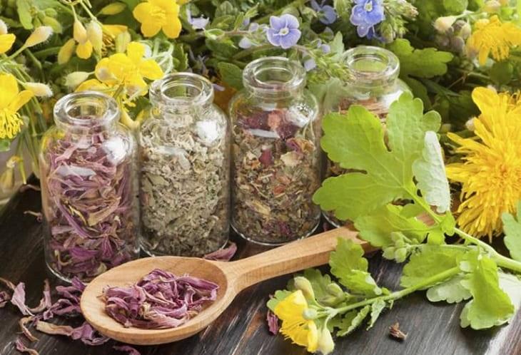 Dùng thảo dược tự nhiên chữa bệnh tại nhà