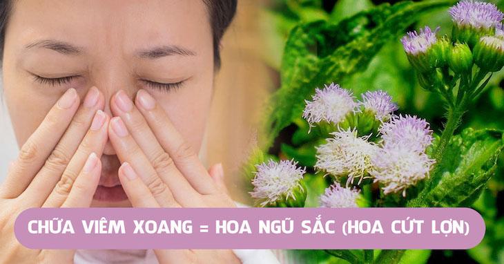 Bài thuốc từ cây hoa ngũ sắc