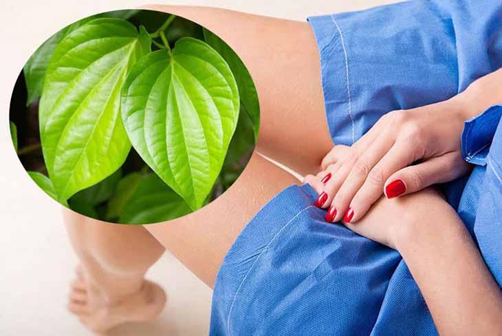 Ngâm rửa vùng kín bằng lá trầu không giúp kháng viêm, giảm triệu chứng ngứa rát